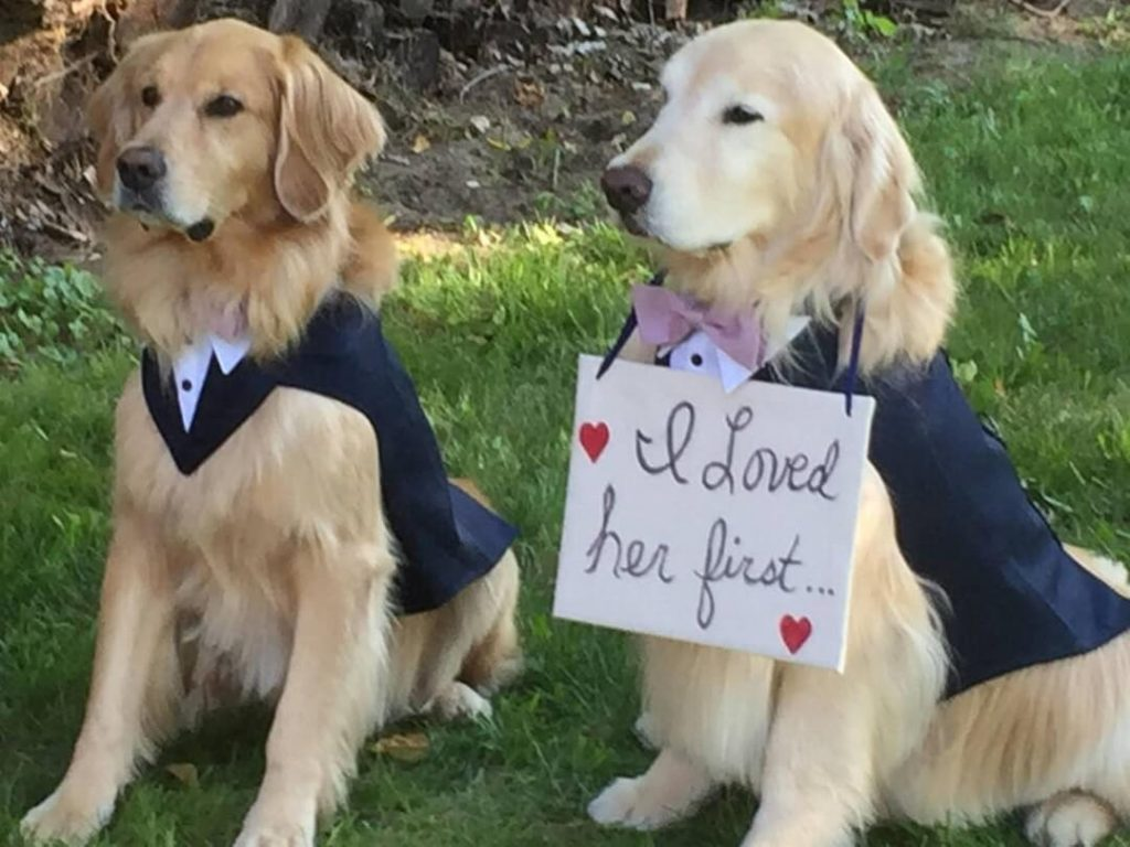 Dogs-or-other-pets-included-in-wedding-ceremony