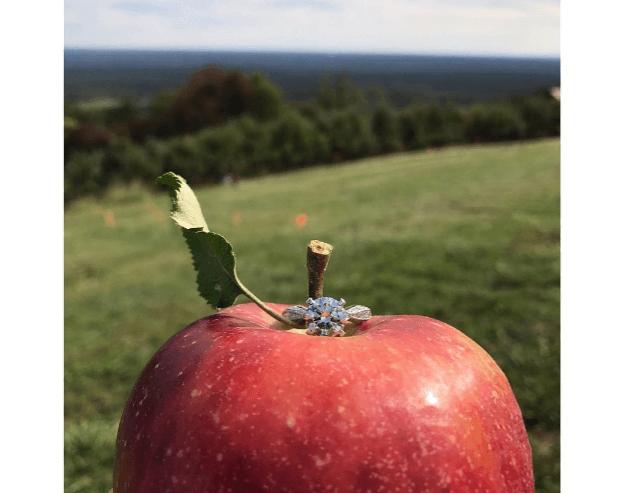 Apple Picking Proposal