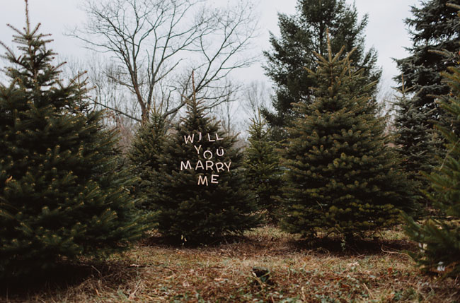 Christmas tree-Holiday proposals - in tree farm